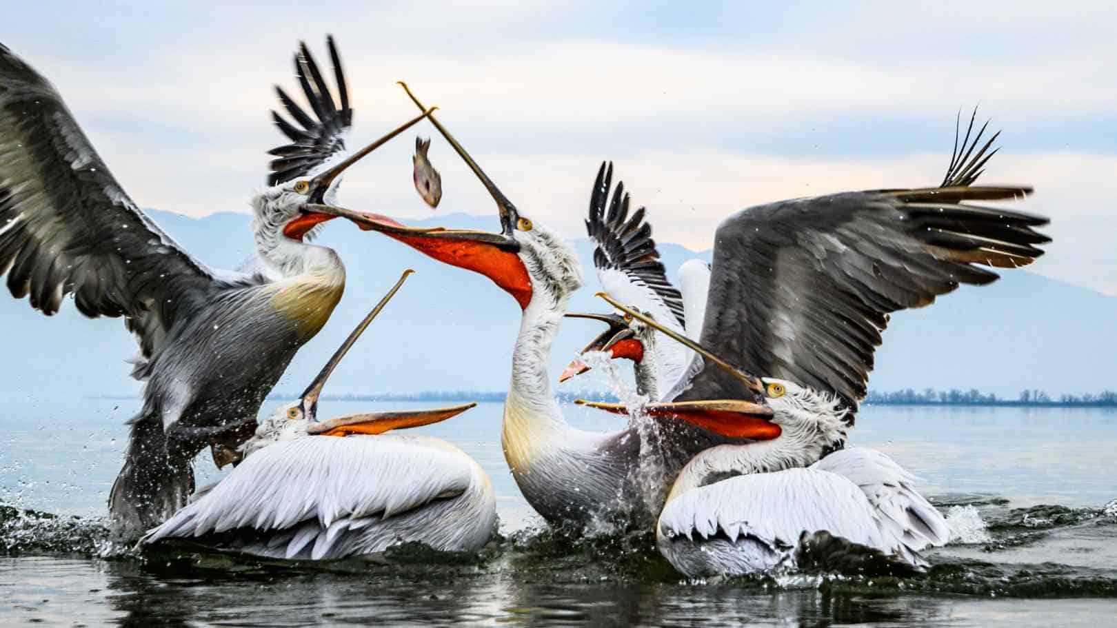 אגם קרקיני, צפון יוון