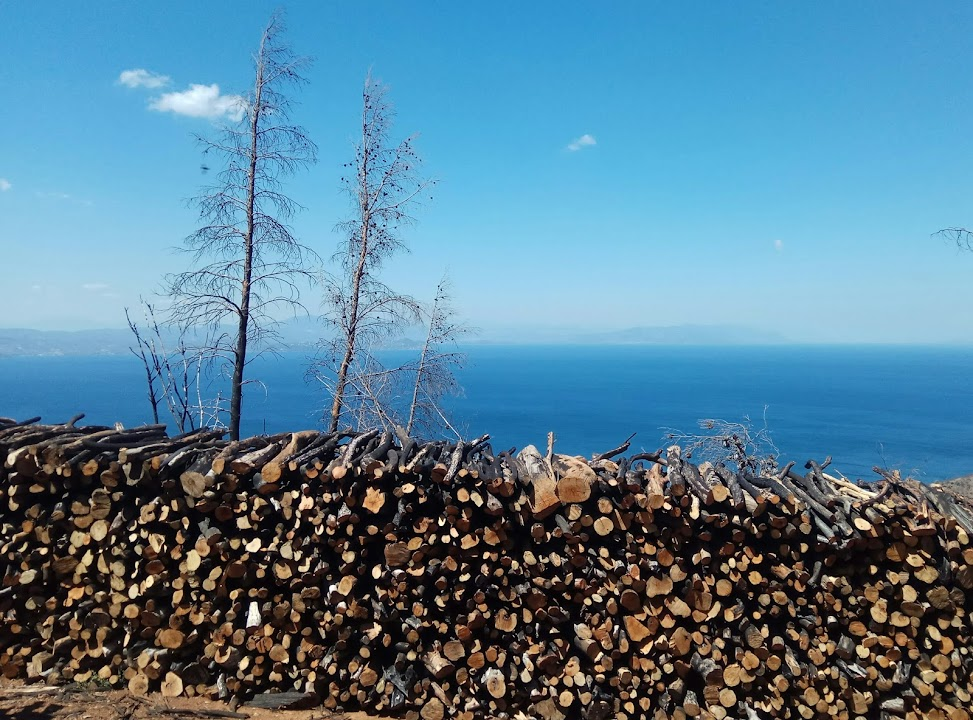 עצים כרותים ב-2017 בעקבות השריפה מעל לימני